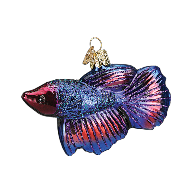 Picture of Beta Fish