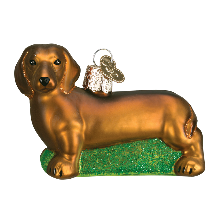 Picture of Dachshund